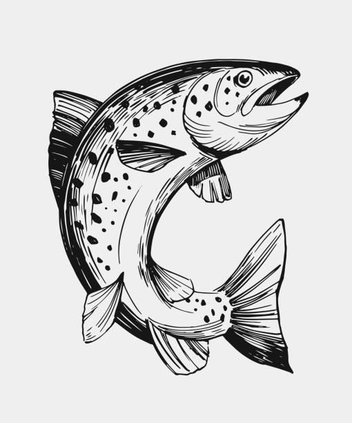 illustrazioni stock, clip art, cartoni animati e icone di tendenza di sketch of fish. salmon, trout. hand drawn illustration. vector. isolated - trout