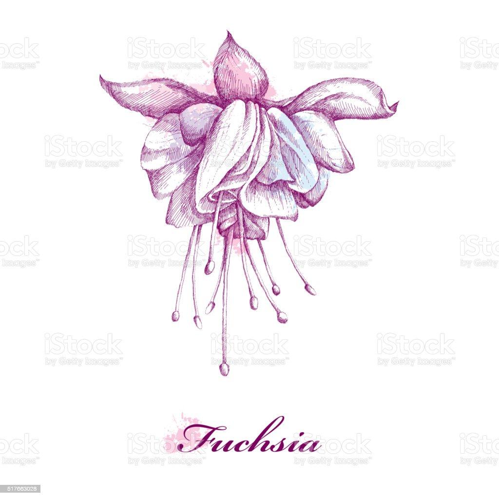 ilustração de desenho de flor rosa isolado no fundo branco com