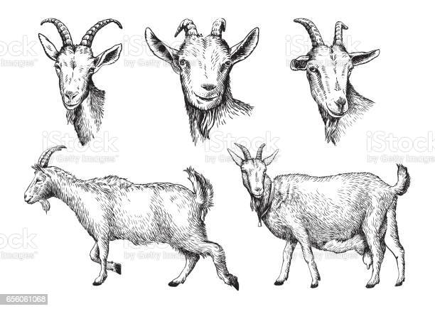 Free goat Images, Pictures, and Royalty-Free Stock Photos