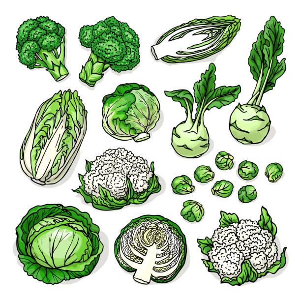 stockillustraties, clipart, cartoons en iconen met schets van gezonde verse groenten geïsoleerd op witte achtergrond - spruitjes