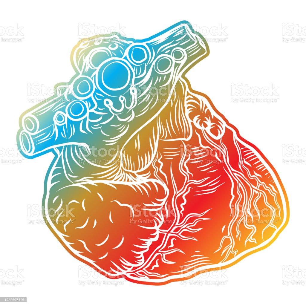 Croquis Du Cœur Humain Style Boho Anatomiques Dessinés à La