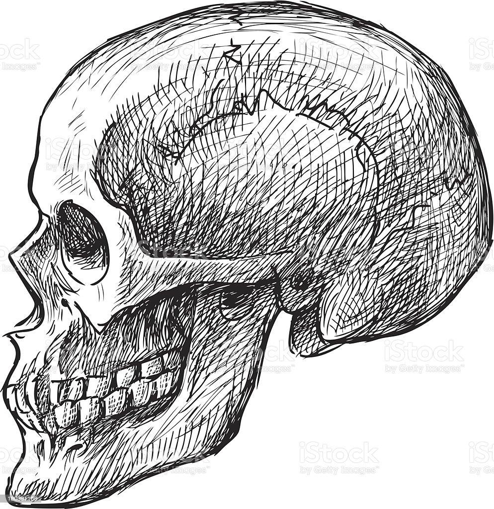 Skizze Des Menschlichen Schädel Stock Vektor Art und mehr Bilder von ...