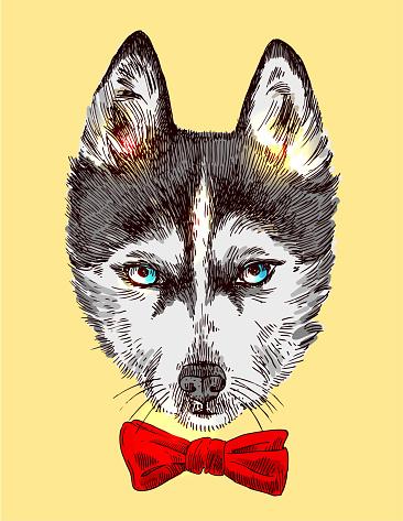 sketch of husky