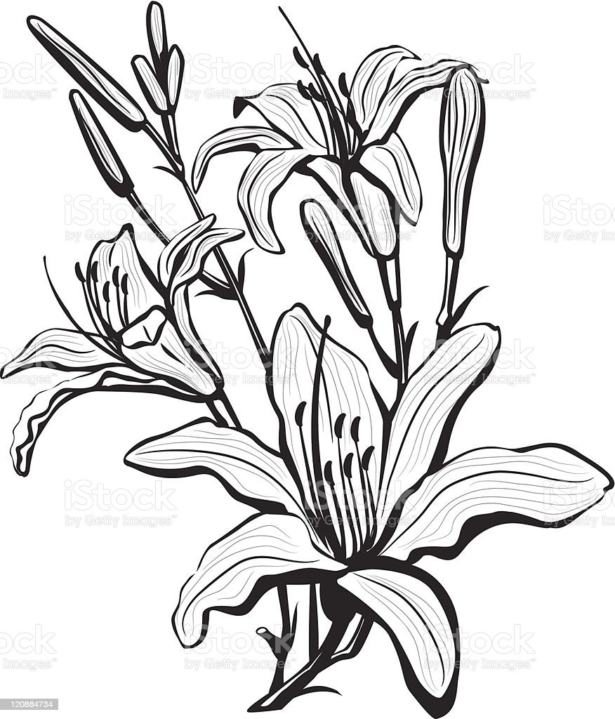 Sketch of lily flowers stock vector art more images of botany sketch of lily flowers royalty free sketch of lily flowers stock vector art amp izmirmasajfo