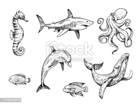 Sketch of sea ​​creatures. Hand drawn illustration converted to vector