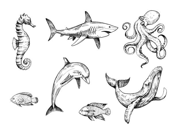 sketch of sea creatures. hand drawn illustration converted to vector - dolphin stock illustrations