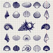 Sketch of sea shells