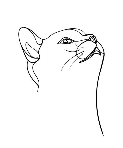 eine skizze des katzengesichts. druck-design auf t-shirt, skizze, karte. - vektor-illustration. - einzelnes tier stock-grafiken, -clipart, -cartoons und -symbole