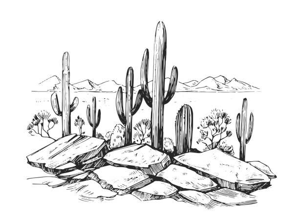 skizze der wüste amerikas mit kakteen. prairie landschaft. handgezeichnete vektorabbildung - wüste stock-grafiken, -clipart, -cartoons und -symbole
