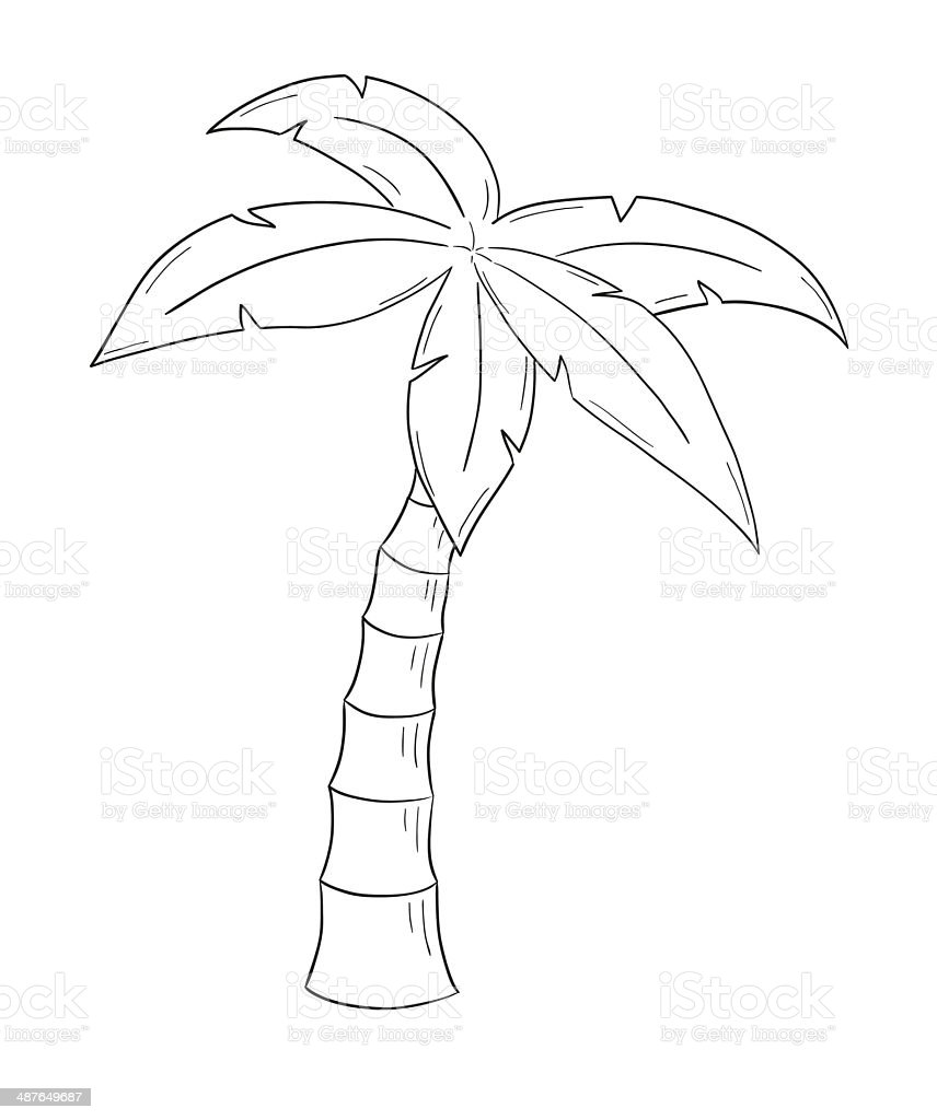 sketch of the palm tree stock illustration