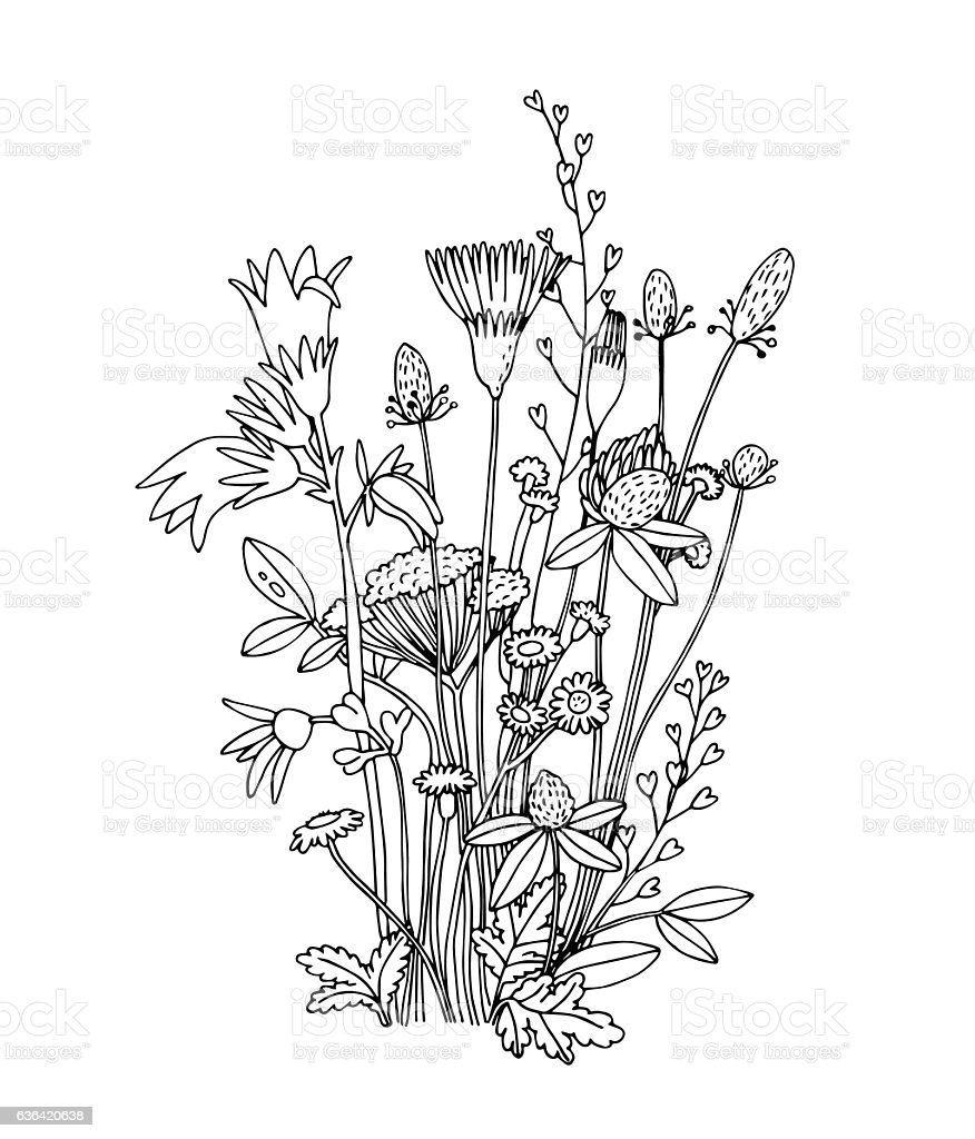 Sketch Of The Wildflowers On A White Background Stock ...