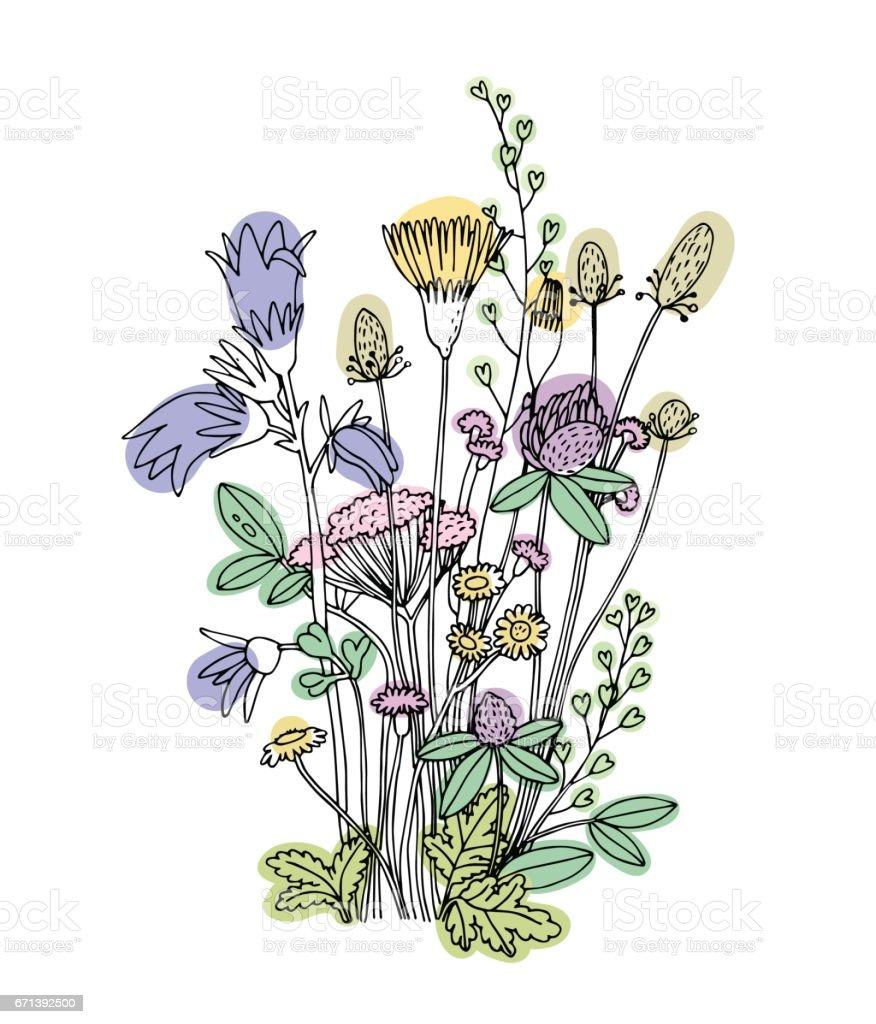 Skizze der Wildblumen auf weißem Hintergrund. – Vektorgrafik