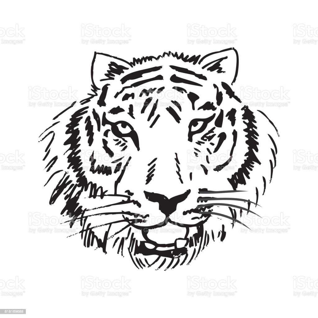 Sketch Of Tiger Stock Illustration Download Image Now Istock