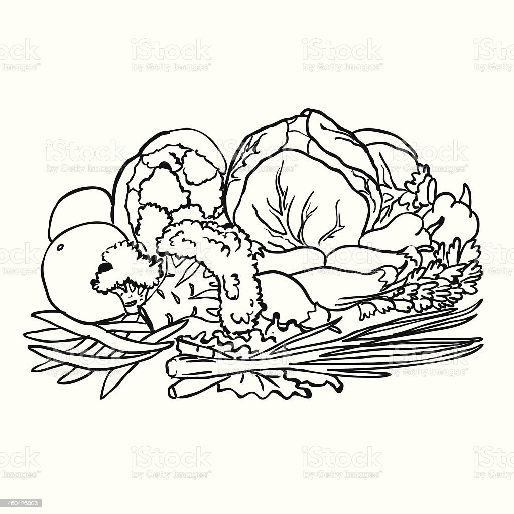 sketch of vegetables and fruits isolated on white stock vector art