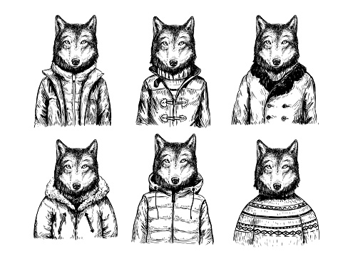 Sketch of wolf in winter jacket. Hand drawn vector illustration