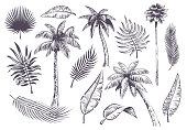 Sketch palm trees and leaves. Hand drawn tropical palms and leaf, black line silhouette exotic plants hawaii natura, engraving vector beach landscape set