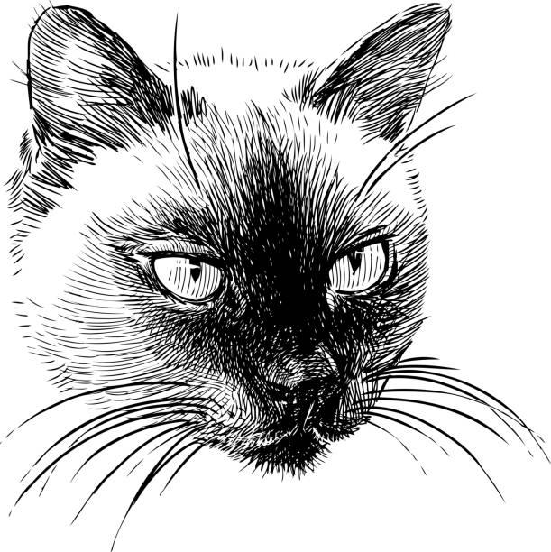 シャム猫 イラスト素材 Istock