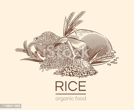 Sketch rice background. Agricultural plant, vintage hand drawn organic rice seeds and sack of grains. Diet engraving vector ear bowl cereal healthy draw for asian restaurant design