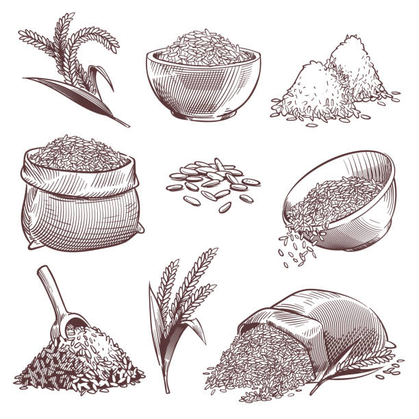 ilustrações de stock, clip art, desenhos animados e ícones de sketch rice. vintage hand drawn asian grains and ear. pile of wild rice cereals, paddy sack. agriculture engraving isolated vector set - arroz alimento básico