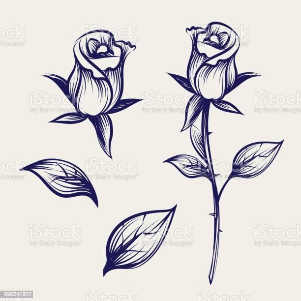 Sketch rose flower bud and leaves vector id696542922?b=1&k=6&m=696542922&s=612x612&h=k7h7aved91sukhnd0x fvx1w83y6nnpo3xrsiq9grpw=