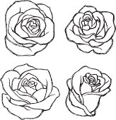 Variations of hand drawn rose. More Sketch Series Lightbox
