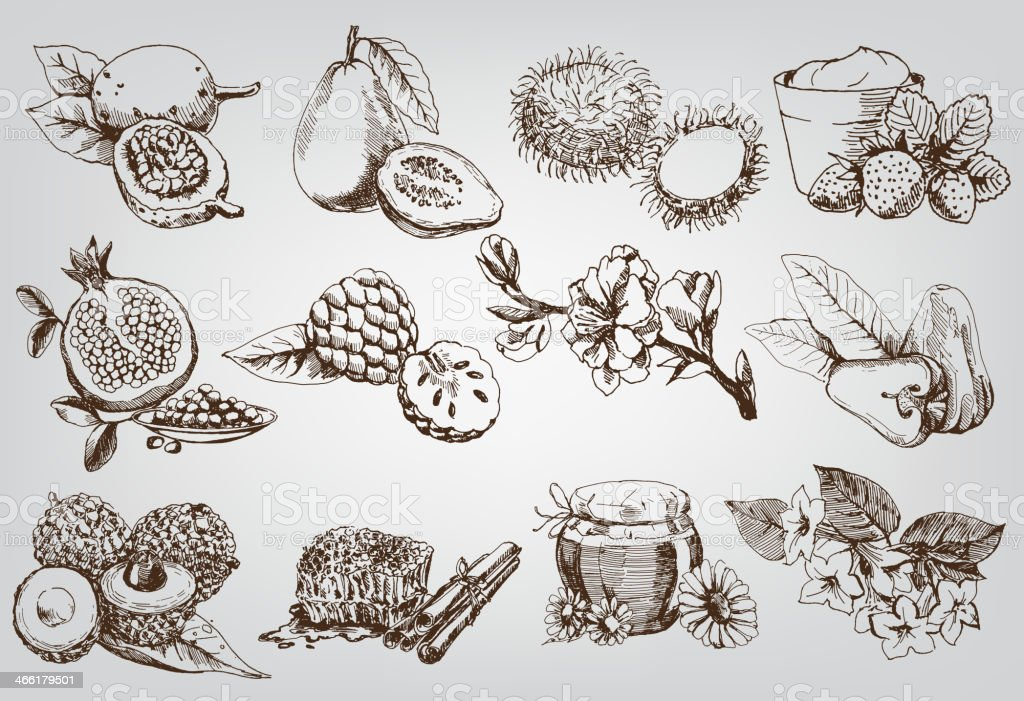 Sketch set of natural ingredients for natural cosmetics vector art illustration
