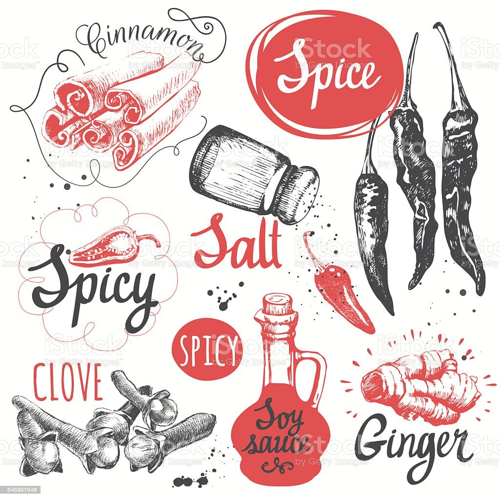 Sketch set with soy sauce, cloves, salt, pepper, cinnamon. vector art illustration