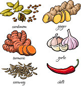 Sketch style spices - garlic, ginger, turmeric, cardamom, chili, caraway