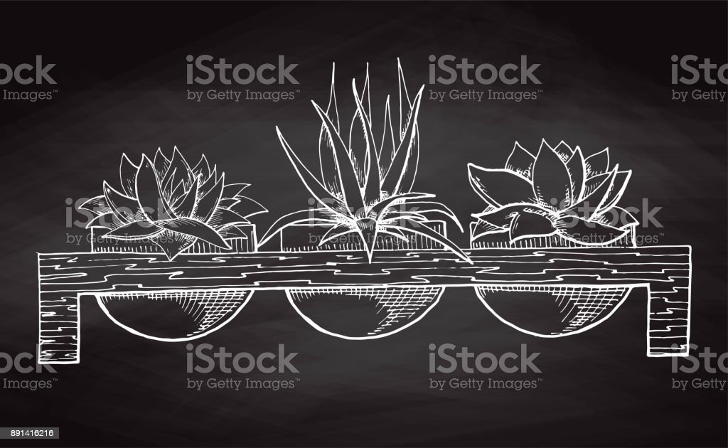 Croquis De Trois Plantes Succulentes En Pot Sur Un Socle En