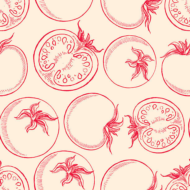 sketch tomatoes cute seamless background with sketch tomatoes tomato stock illustrations
