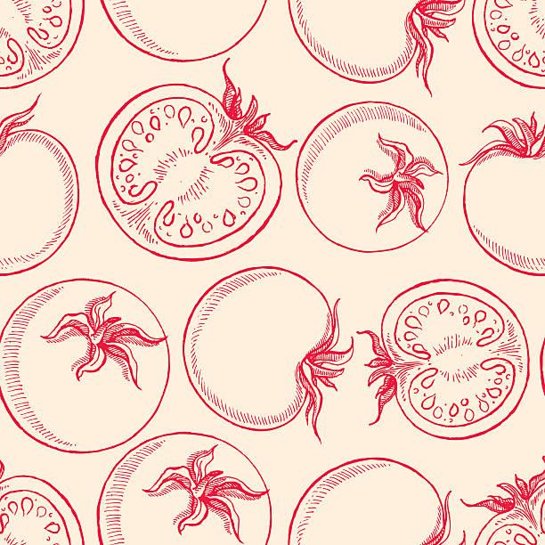 sketch tomatoes - tomato stock illustrations