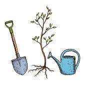 sketch tree planting vector id