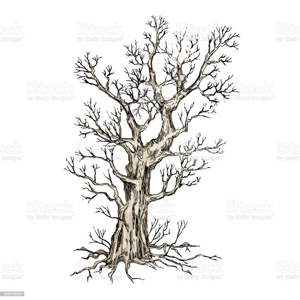Dessin arbre vectoriel cliparts vectoriels et plus d - Dessin arbre nu ...