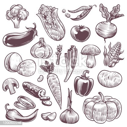 Sketch vegetables. Healthy foods natural vegetable, organic broccoli, tomato and potato, cabbage and carrot, vintage hand drawn vegan ingredient isolated vector set