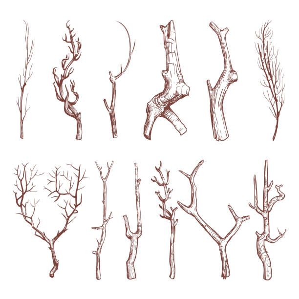 sketch wood twigs, broken tree branches vector set - twig stock illustrations, clip art, cartoons, & icons
