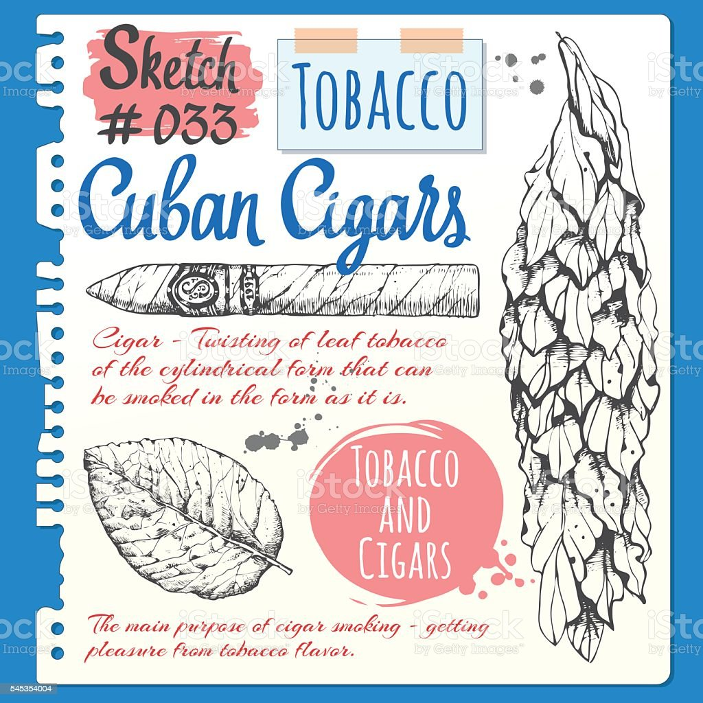 Sketchbook sheet with cuban cigar and tobacco leaves. vector art illustration