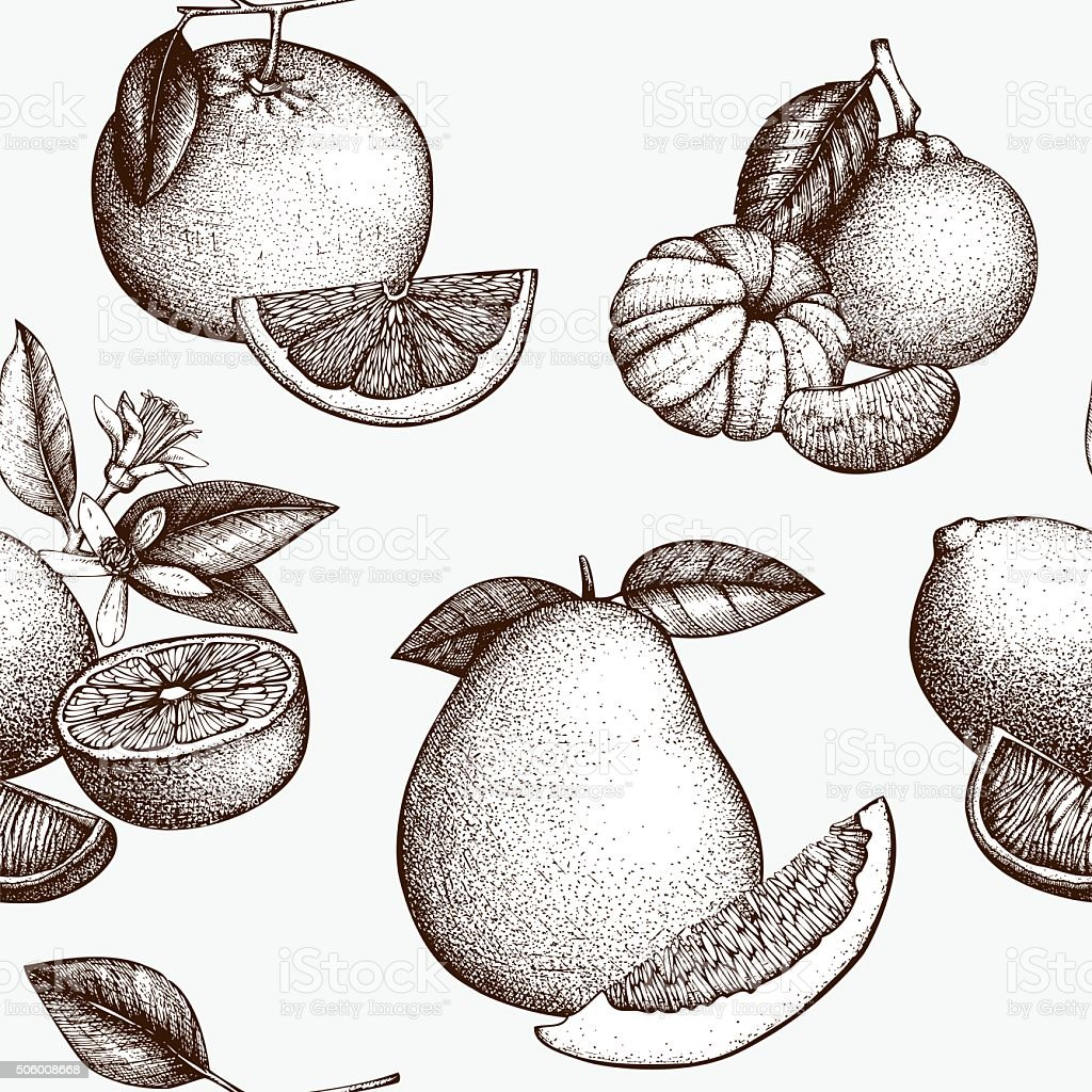 Sketched background with highly detailed citrus fruits vector art illustration