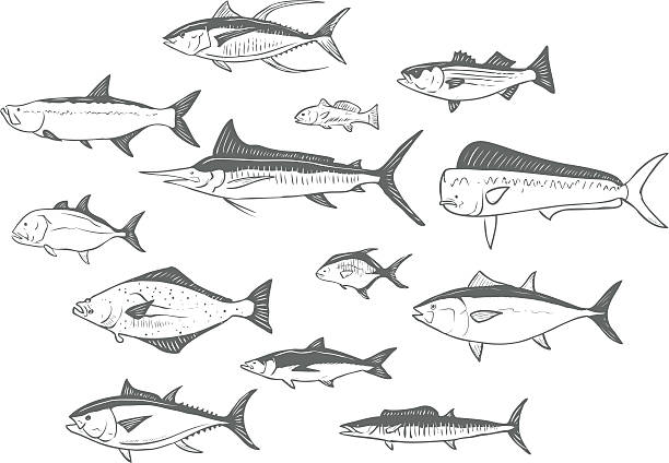 sketched fish vector art illustration
