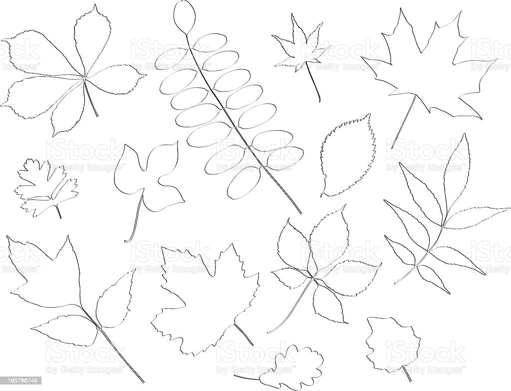 Sketched Leaves Set royalty-free stock vector art