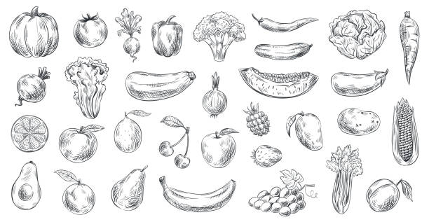 Sketched vegetables and fruits. Hand drawn organic food, engraving vegetable and fruit sketch vector illustration set Sketched vegetables and fruits. Hand drawn organic food, engraving vegetable and fruit sketch. Healthy fresh vegetarian or vegan foods doodle. Vector illustration isolated symbols set banana drawings stock illustrations