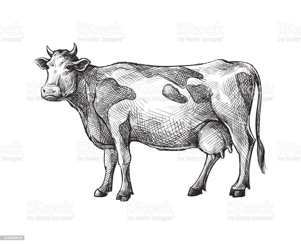 Inek El Ile çizilmiş Kroki Hayvancılık Sığır Hayvan Otlatma Stok