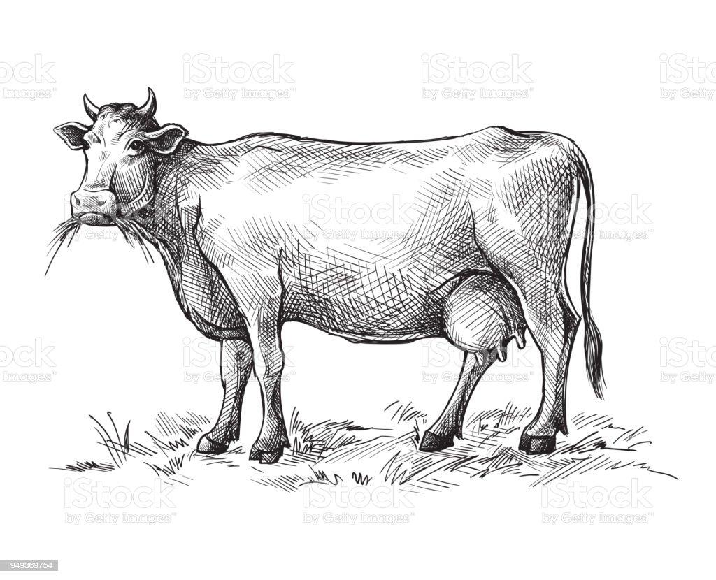 Skizzen Der Kuh Von Hand Gezeichnet Vieh Rinder Tiere Weiden Stock ...