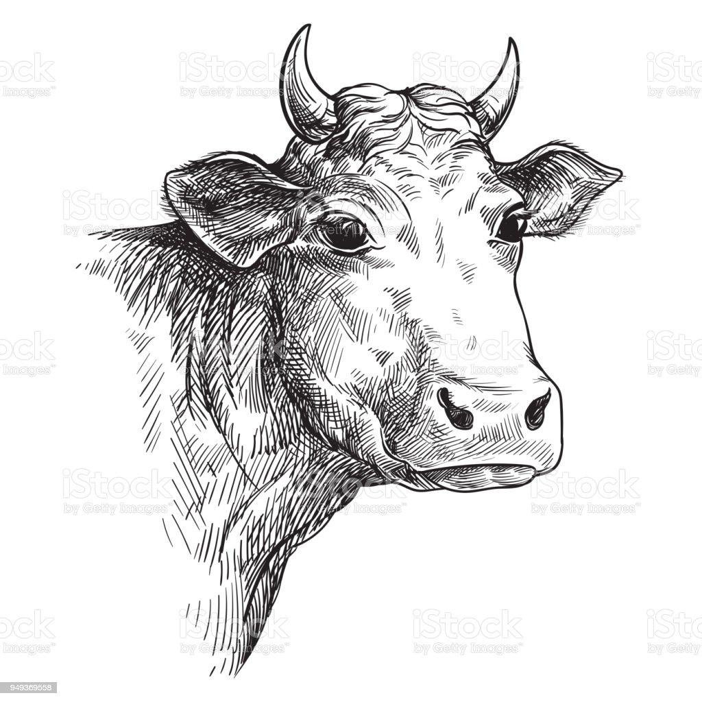 Elle çizilmiş Yüz Inek çizimler Hayvancılık Sığır Hayvan Otlatma