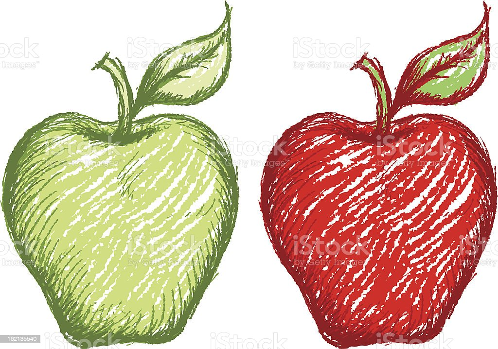 sketchy apple vector art illustration