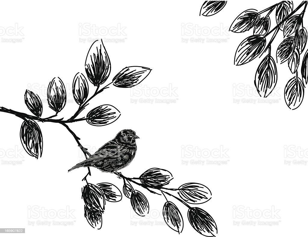 Sketchy Bird Silhouette vector art illustration