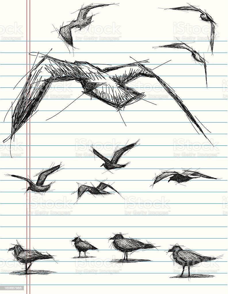 sketchy birds vector art illustration