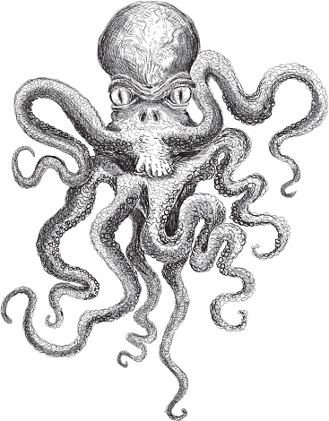 Sketchy detailed octopus