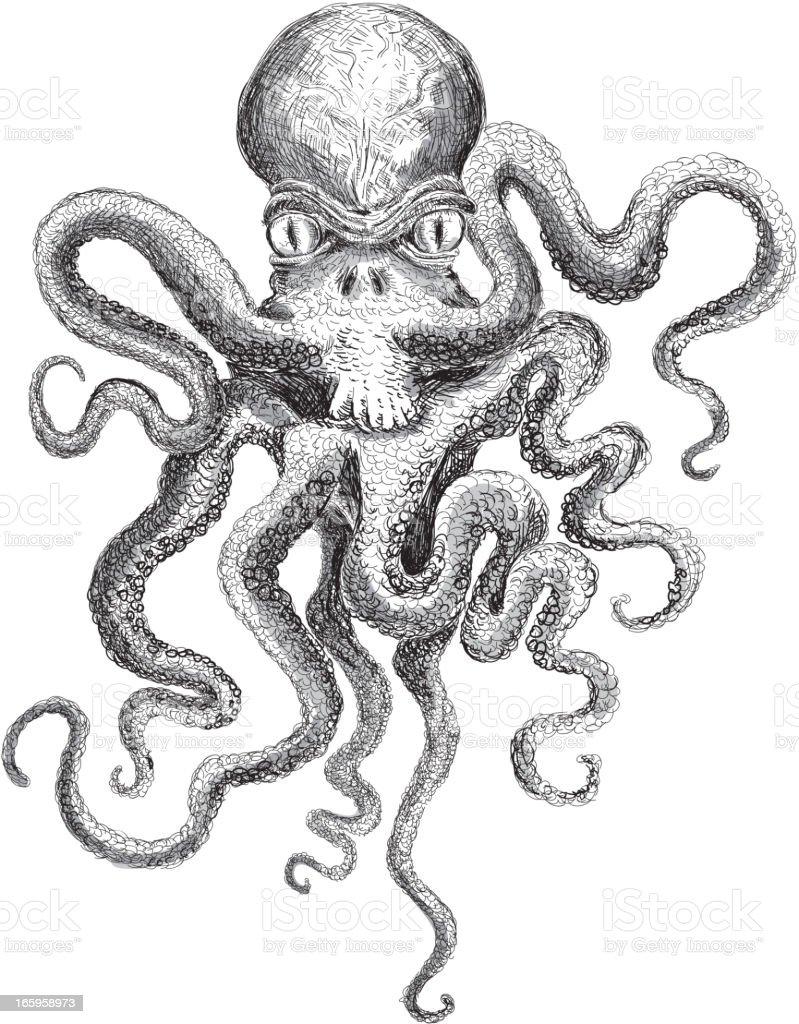 Sketchy detailed octopus vector art illustration