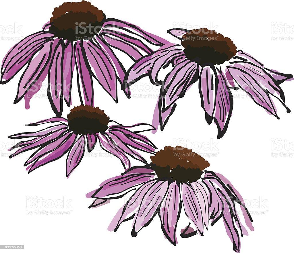 Sketchy Echinacea flowers vector art illustration