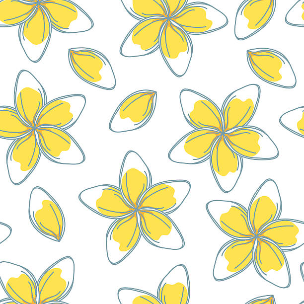 Sketchy Frangipani Flowers Seamless Pattern Hand drawn Frangipani in a repeating background pattern. Flowers are on their own layer.  frangipani stock illustrations